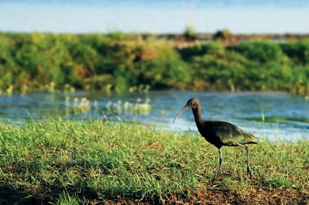 Ballycotton bird sanctuary